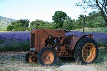 Lavendel von Marcel Brands