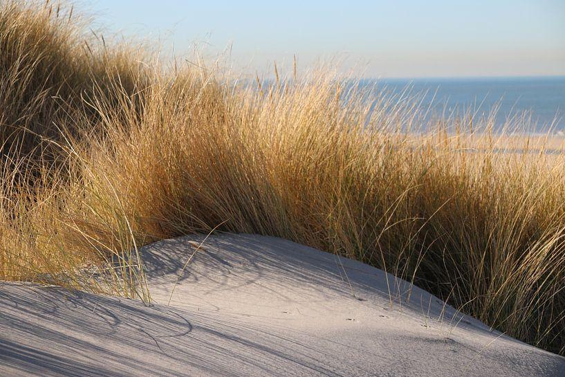 Helmgras in de zon in de duinen bij het strand van Monster met zee op achtergrond van André Muller