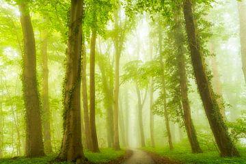 Nebeliges Grün von Lars van de Goor