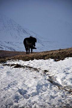 Cheval islandais dans un paysage hivernal sur Elisa Hanssen