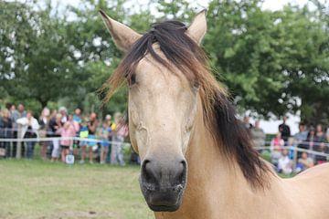 Nieuwsgierig Spaans paard van Joan Plaatsman