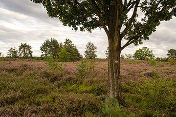 Baum auf der Heide von Johan Vanbockryck