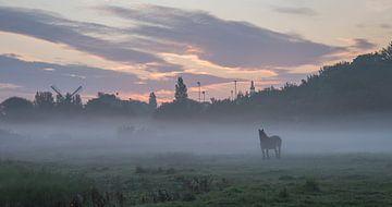Paard in de ochtendmist van