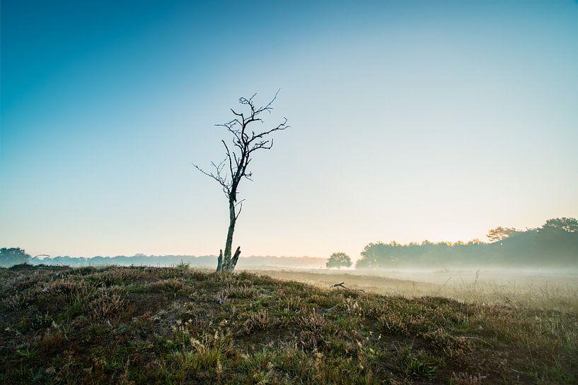Nebliger Morgen von Jouke Wijnstra Fotografie