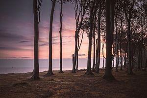Sonnenaufgang im Gespensterwald Nienhagen