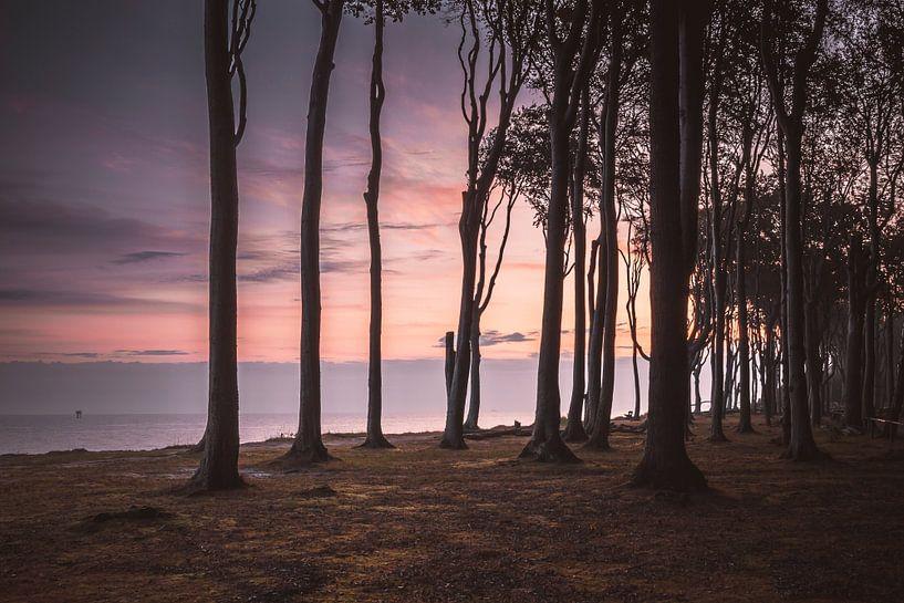 Sonnenaufgang im Gespensterwald Nienhagen von Heiko Lehmann