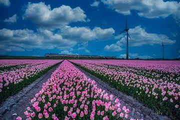 roze tulpen van Peter Heins