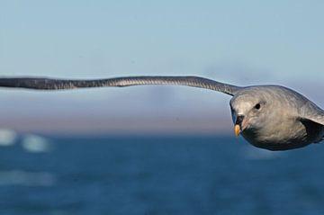 Stormvogelvlucht van