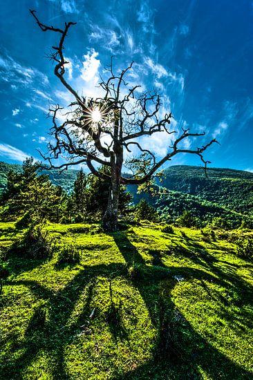 Dode boom van Harrie Muis