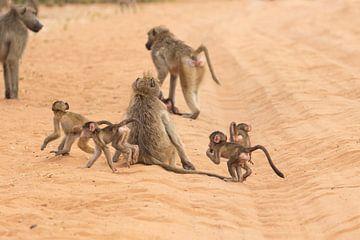 Spelende bavianen van GoWildGoNaturepictures