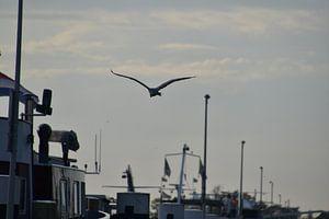 Reiher fliegt über Boote
