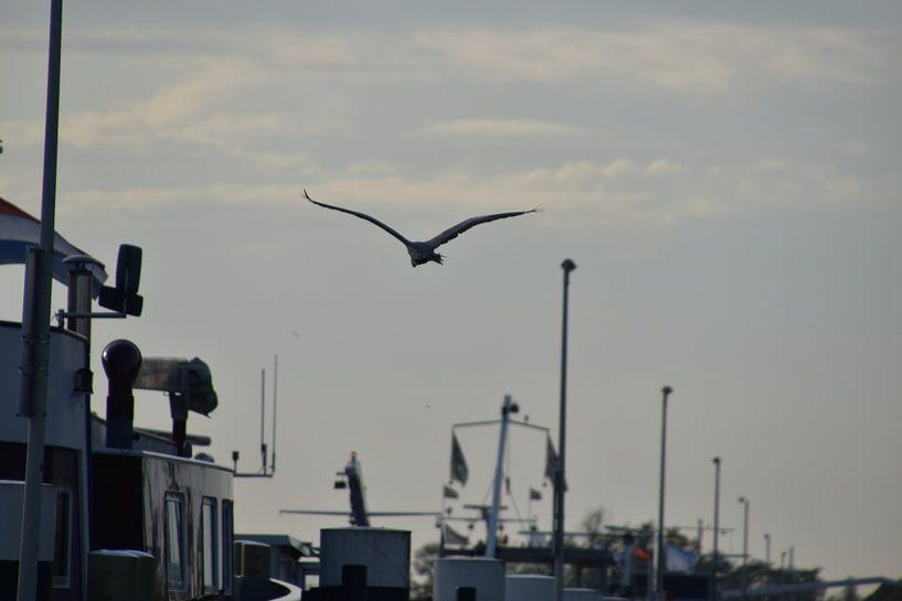 Reiher fliegt über Boote von Naomi Visser