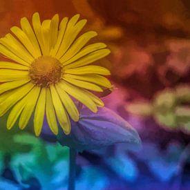 Bloem in kleuren van Leo Huijzer