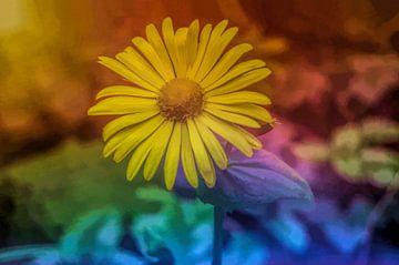 Bloem in kleuren von Leo Huijzer