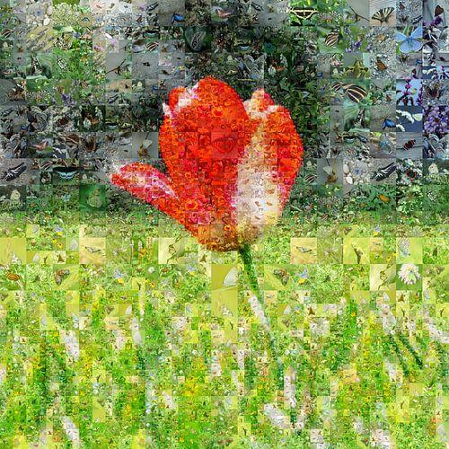 Tulp in veld van