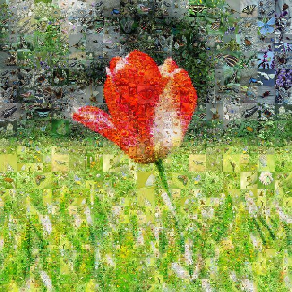Tulp in veld van Carla van Zomeren