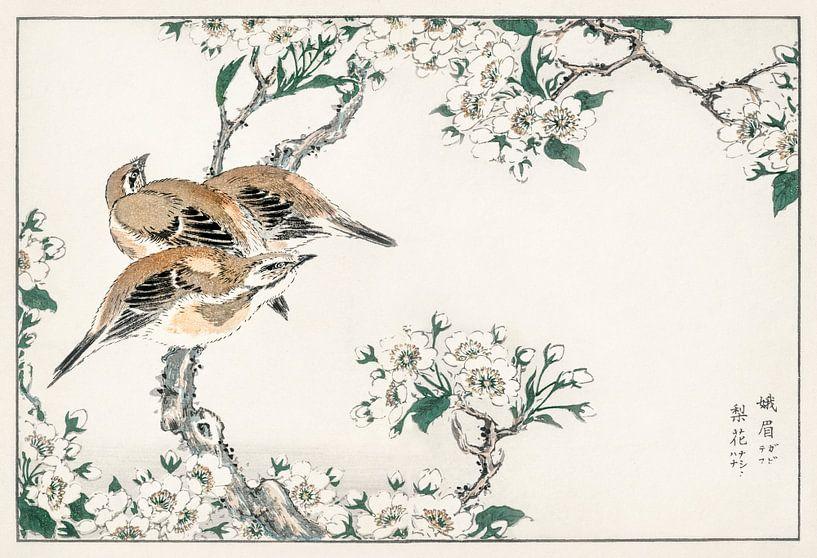 Japanse weidegors en perenbloesem illustratie door Numata Kashu van Studio POPPY