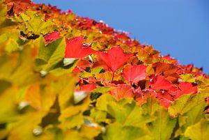 Kleurige herfstbladeren
