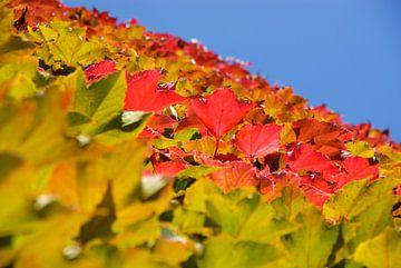Kleurige herfstbladeren van Patricia Dhont