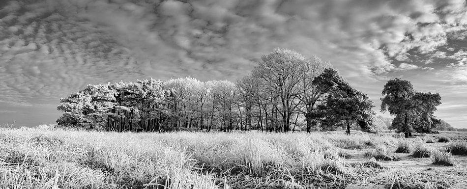 Panorama Winterlandschap Nederland van Peter Bolman