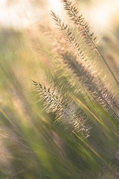 Wogender Rasen von Karel Ton