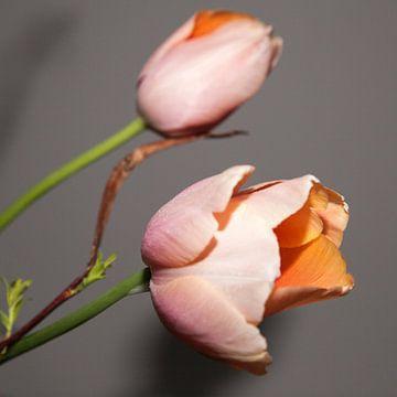 Dutch tulip van Anneke Kroonenberg