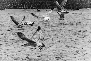 fliegende Möwe in schwarz-weiß von Han Dou