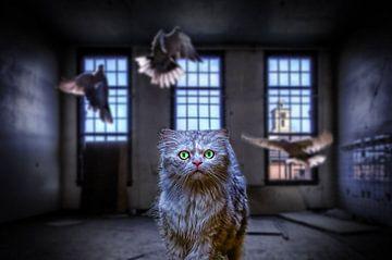 Cat von Juliën van de Hoef