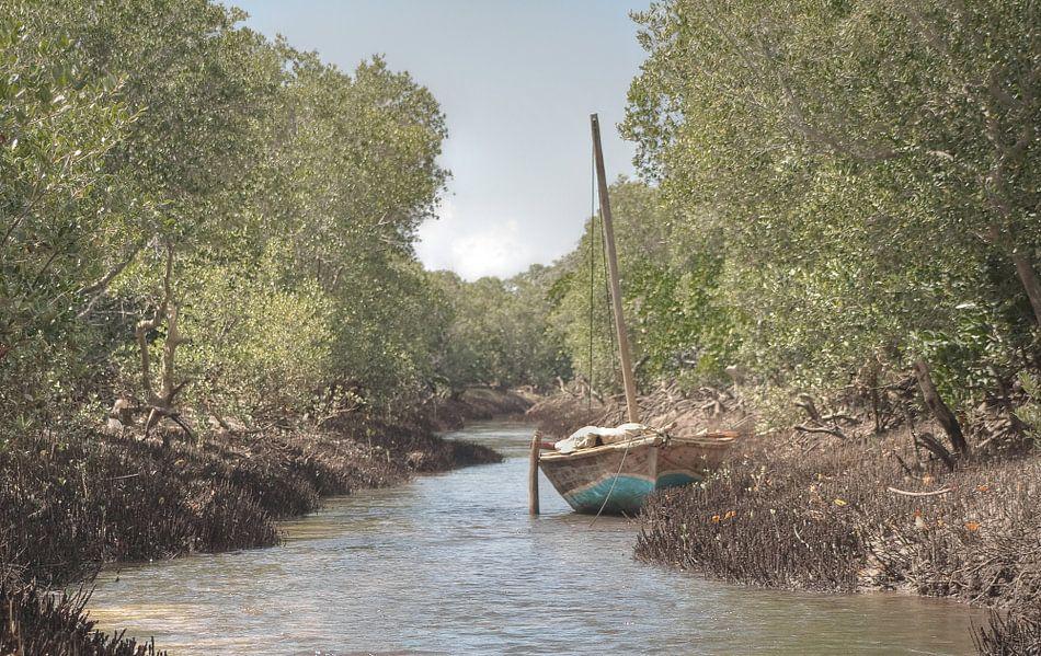 Mangrove van BL Photography