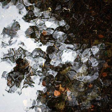 waterreflectie van