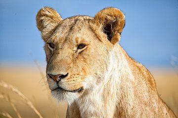 Portrait d'une lionne sur Angelika Stern