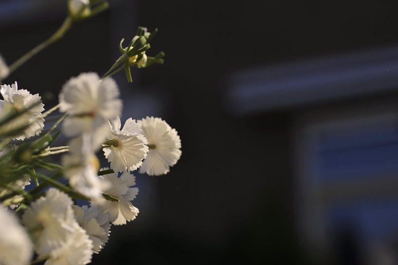 Blume weiß von Agnes Meijer