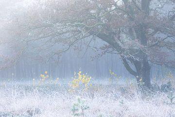 gelbe Birken unter großer Eiche von nebligem Eis am Morgen von Olha Rohulya