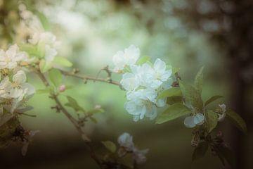 Zweig eines Apfelbaums mit Blüte von Jille Zuidema
