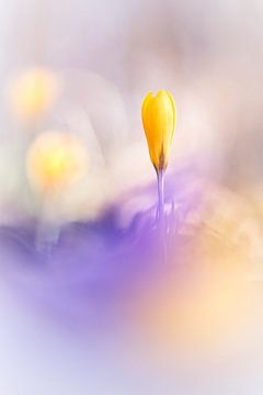 Yellow and Purple van Bob Daalder