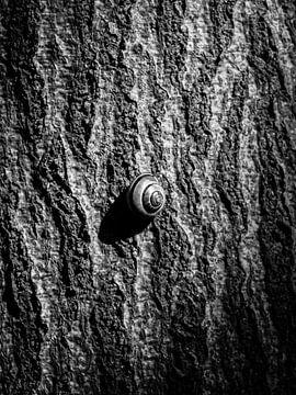 Snail noir van Harry Bouman