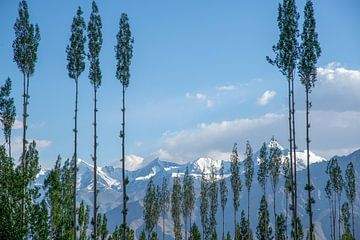 Himalaya, Ladakh, India van Jan Fritz