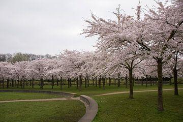 Blossom Park Amsterdam Forest sur Charlene van Koesveld