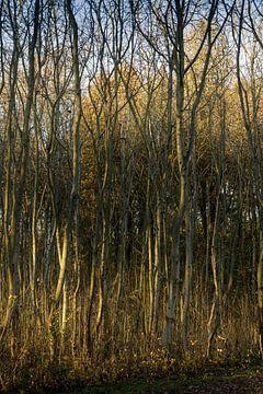 Atmosphärischer Kreis Wald bei Almere in der untergehenden Sonne von Rene  den Engelsman