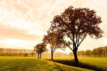 Eiken in het ochtendlicht sur Sjoerd van der Wal