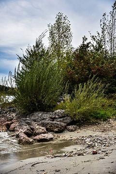 Prachtige planten aan de oevers van de Chiemsee van Nadine Rall