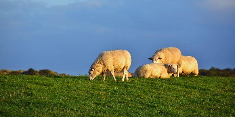 Schafe auf dem Deich von Paul van Baardwijk