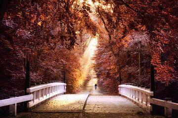 Over de brug van licht van