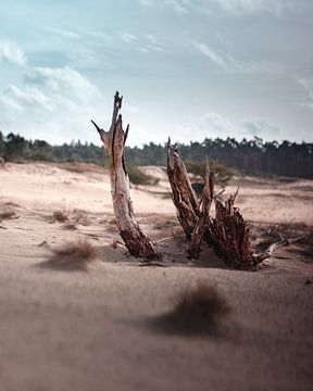 Treibholz auf dem Ödland von Nordkaia