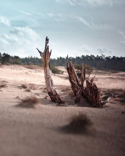 Drijfhout op de woestenij van Nordkaia
