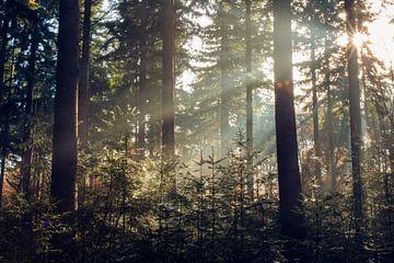 Tegenlicht in het bos van Marly Tijhaar