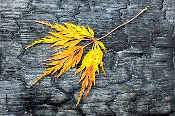 Verbrand zwart hout met geel herfstblad.  van Ben Schonewille