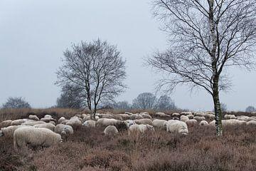 Schaapherder en kudde 03 von Cilia Brandts