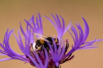 Bezaubernder Frühling für Deine 4 Wände! von Christian Feldhaar