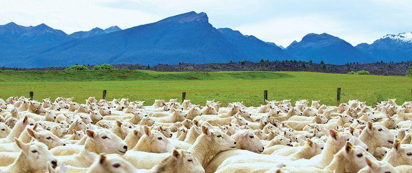 Schaapskudde in Nieuw Zeeland van Ricardo Bouman